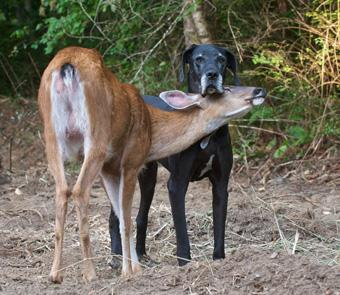 A dog and a deer hanging out